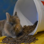 EM  (=Effektive Mikroorganismen) bei Geflügel und Kaninchen!
