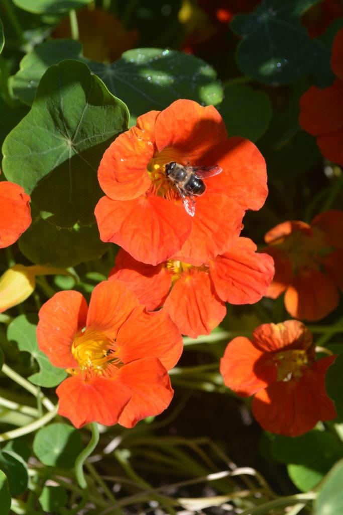Eine Kombination verschiedener Blumen erfreut jedes Naturherz