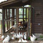 Einstreumaterialien im Geflügel-/Kleintierstall